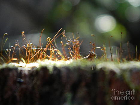 Tiny Plants on a Log by Sara  Mayer