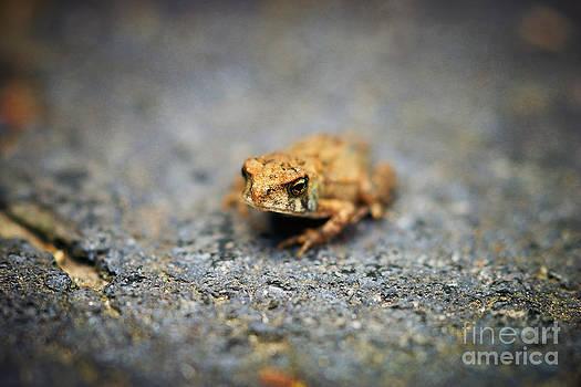 Tiny Toad Big Attitude by Susan Isakson