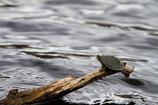 Jason Smith - Tiny Turtle