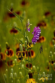 Tishomingo Wildflowers by Royce  Gideon