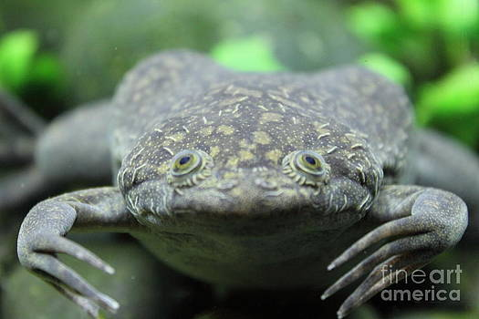 To call on a toad by Stephanie Peters