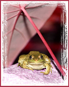 Toad by Fuad Azmat