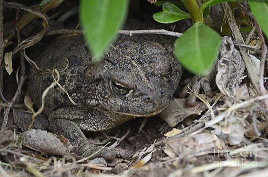 Toad Under Oleander by Suze Taylor