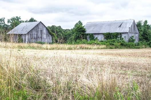 Tobacco Barns Calvert County Maryland by Gordon H Rohrbaugh Jr