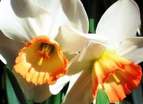 Together in Spring by Cathie Tyler