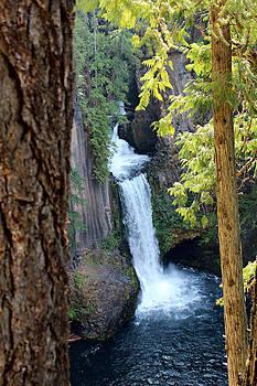 Toketee Falls by Jo Sheehan