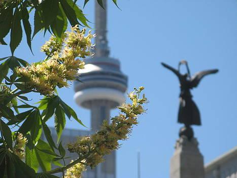 Alfred Ng - Toronto spring