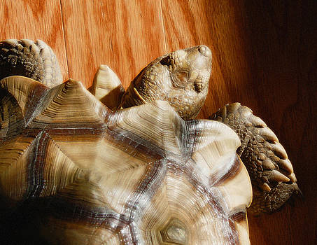 Rebecca Brittain - Tortoise Walking