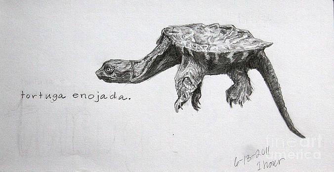 Tortuga Enojada by Sarah Mushong
