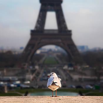 Tourist by Franco Farina