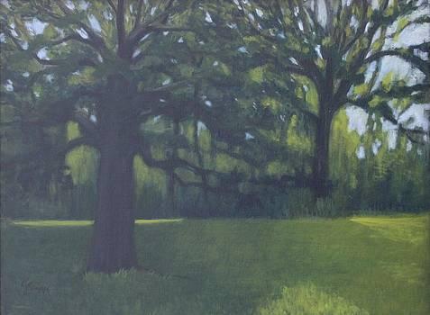 Towering Trees by Linda Krupp