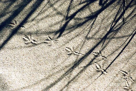 Tracks by Wedigo Ferchland