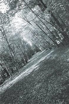 Trail by Ronald Mcduff