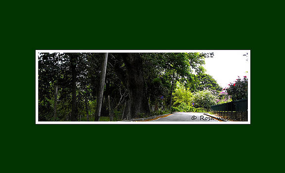 Trailway by Rosa Mahabir