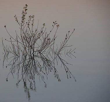 FeVa  Fotos - Tranquil Twigs