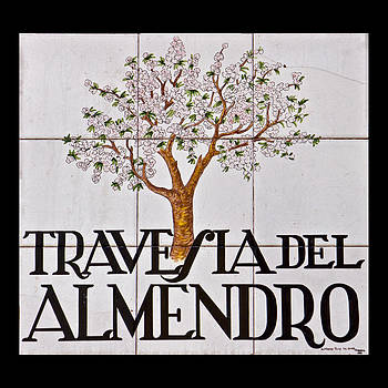 David Pringle - Travesia del Almendro