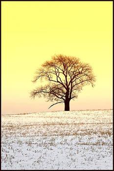 Tree 3 by Fuad Azmat