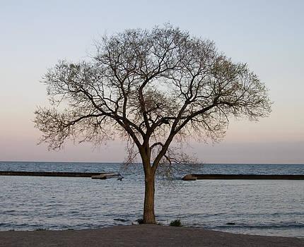 Tree and Breakwater by Allan MacDonald
