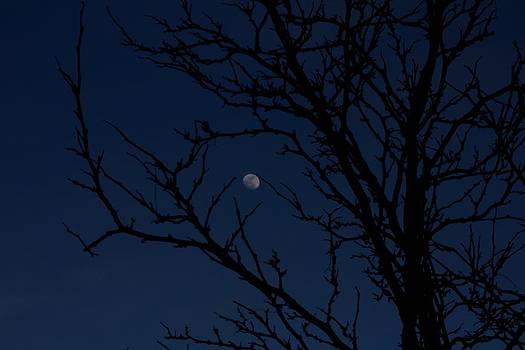 Tree and Moon at Dusk by Robert Morin