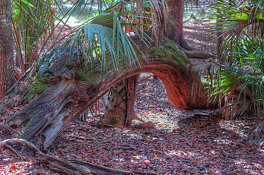 Ronald T Williams - Tree Arch