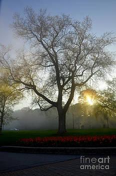Pravine Chester - Tree at dusk