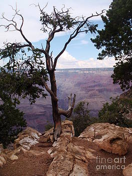 Tree at the Grand Canyon by Catherine DeHart