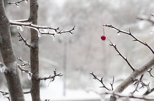 Tree blood by Catalin Scarlat