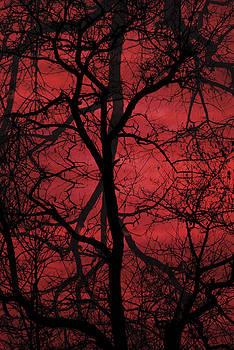 Tree blood by Yuri Santin