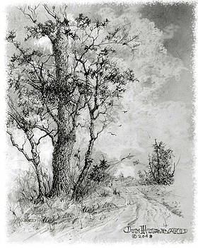 Jim Hubbard - Tree by the Road