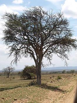 Tree  by Carol Evans