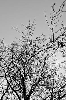 Tree by Daniel Kulinski