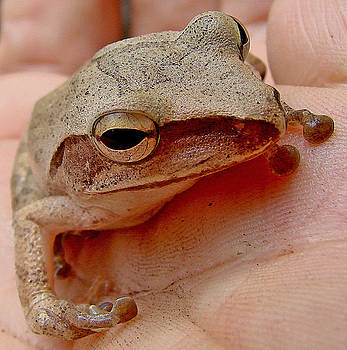 Roy Foos - Tree Frog In Hand