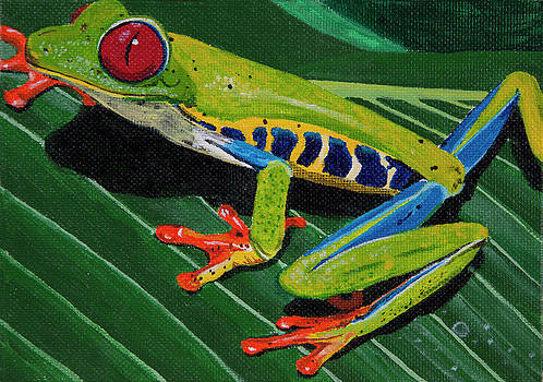 Tree Frog by Sandra Azancot