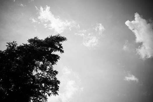 tree III by Jacek Nazim