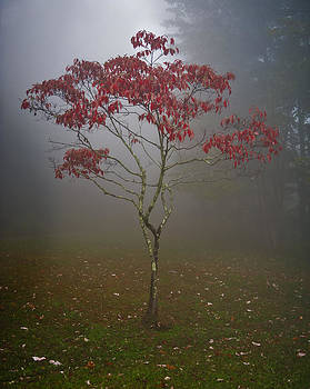 Tree in Fog by Rick Hartigan