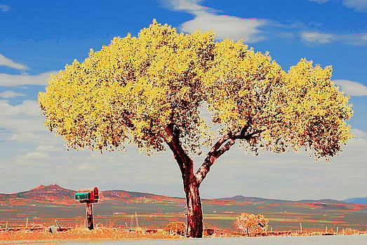 Tree in Mutated Color by Vicki Coover
