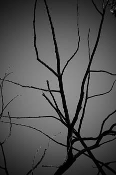 Tree by Jacek Nazim