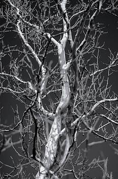 Tree by James Bull