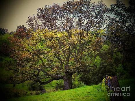 Tree by Joyce Kimble Smith