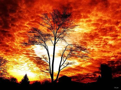 Ms Judi - Tree Light