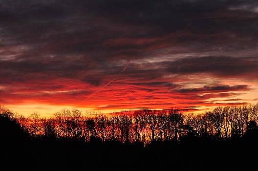 Tree line Sunset 3 by Peter  McIntosh