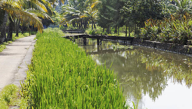 Kantilal Patel - Tree Lined Waterways