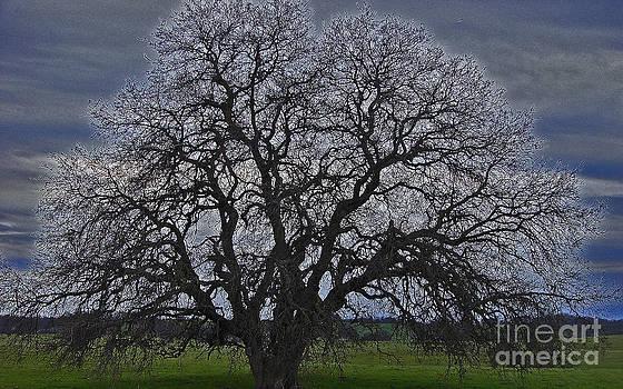 Tree Of Ancestors by Suze Taylor