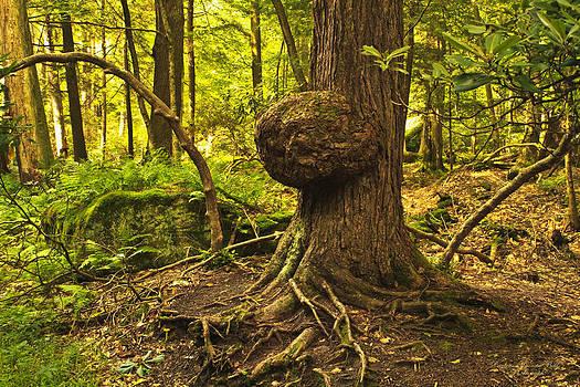 Darlene Bell - Tree Of Life