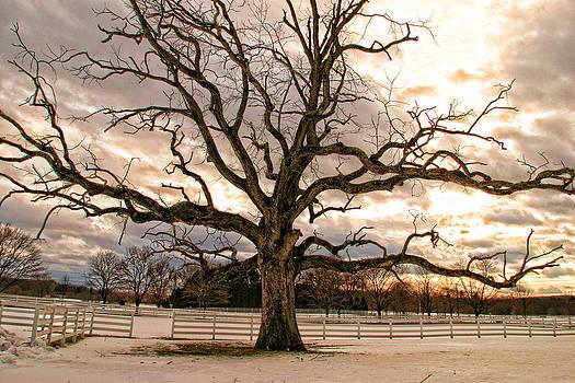 Tree of Life by Dawn Nicoli