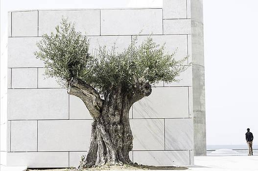 Tree of life by Pedro Branco