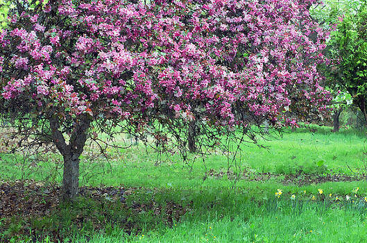 Tree of Pink by Cheryl Cencich