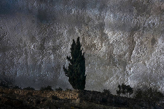 Tree on the wall by Adeeb Atwan