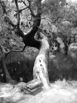Tree Over The Edge by LDPhotography Stephanie Armstrong