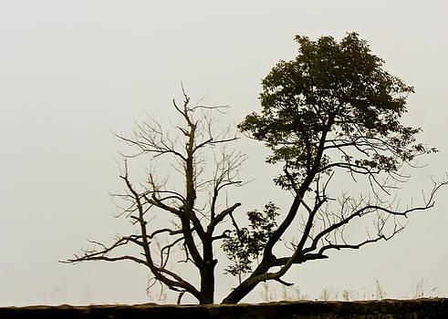 Tree by Penny McClintock